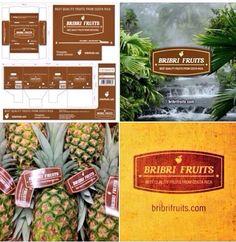 Cajas para piñas aéreas  www:BriBriFruits.com @bribrifruitscostarica #piñas #pineapple #pineapples #ananas #frutastropicales #dieta #nutricion #salud #costarica #caribe #puravida #instanfood #piñasdecostarica #fruterias #mercados #mercamadrid #mercabarna #mercasevilla #spain #bribrifruits #disfrutadelapiña @btfgroup_ @fundacionesportus_ @tabogacn #fruitlogistica2016 #Berlin #Barcelona #Madrid @btfgroup_ #calidad #frescura #FreshFruits