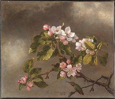 Hummingbird and Apple Blossoms  Martin Johnson Heade