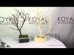 Manzanita Branch Centerpieces & Boxes Used in Weddings & Special Events by KOYAL WHOLESALE