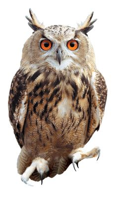 OWL02_PR_HPE6.png