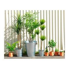 IKEA - FEJKA, Artificial potted plant, Lifelike artificial plant that remain just as fresh-looking year after year.