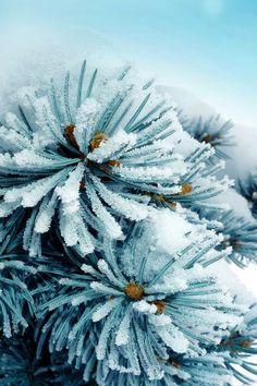 640-SnowFrozen-l