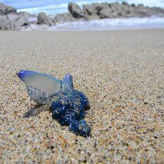 Blue bottles washing up on Seapark beach. Blue Bottle, Bottles, Coast, Beach, Instagram, Seaside