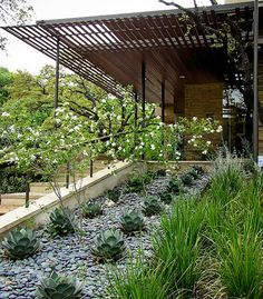 agave and shade structure and anacacho orchid trees, from http://codesignaustin.com/
