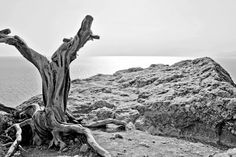 Best of Nature Black and White Photography of Tree
