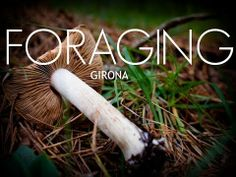 Check out my latest video about a  morning foraging mushrooms in Spain.  More stories like these found on Baconismagic.ca