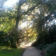 Morning sun at the park