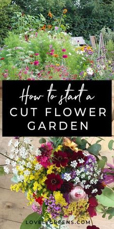 Tips on how to grow a cut flower garden including how to layout your garden, amending soil, and flowers to choose for scented bouquets