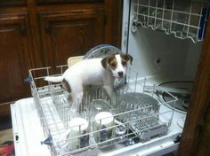 Helper @jcharles Hmmm, so it's just not our Jack Russell that does this!