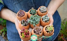 Cheap plant plug, Buy Quality plant line directly from China planting crocus Suppliers: Small egg pot : 4cm diameter height 6cm