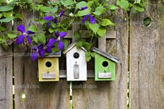 Garden Houses for Birds | Bird Houses and Clematis!
