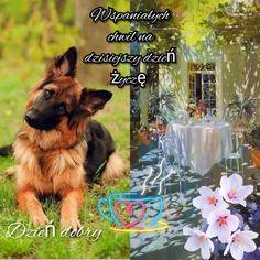 Dogs, Animals, Art, Art Background, Animales, Animaux, Pet Dogs, Kunst, Doggies