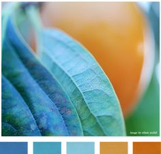 this color palette is positively DELICIOUS!