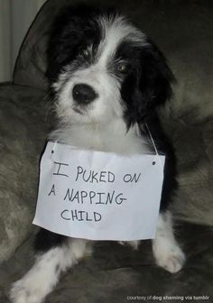 Dog Shaming features the most hilarious, most shameful, and never-before-seen doggie misdeeds. Join us by sharing in the shaming and laughing as Dog Shaming reminds us that unconditional love goes both ways. Funny Animal Pictures, Cute Funny Animals, Funny Cute, Funny Dogs, Dog Pictures, Funny Dog Faces, Hilarious Sayings, Funny Memes, That's Hilarious