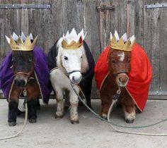 c056e4c3b1 Los tres reyes magos  the three wise men ponies Beautiful Horses