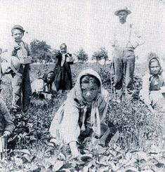 Italian Immigrants picking berries 1910 http://www.latinamericanstudies.org/italian-immigrants-2.htm