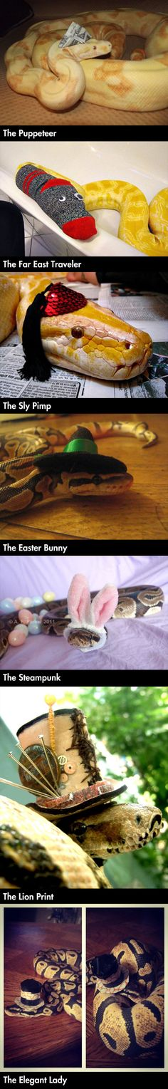If I knew you could dress snakes up for easter I would have go one years ago!