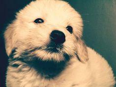 Dog:-)