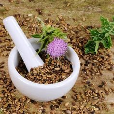 Thistle Seeds Silybum marianum Milk Thistle SeedsSow thistle Sow thistle most often refers to yellow flowered, thistle-like plants in the genus Sonchus Sow thistle may also refer to Thistle Seed, Milk Thistle, Herbs For Sleep, Biennial Plants, Scottish Thistle, Herb Seeds, Detox Your Body, Seed Packets, Edible Flowers