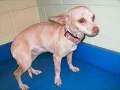 Needs a new home..Facebook page Charlie to the Rescue Crossposts core more info