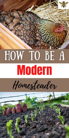It seems like everywhere you turn, people are catching on to homesteading, but exactly HOW do you become a modern day homesteader? Where do you begin? Do you need land to become a modern homesteader? I've got the answers for you but here's a hint....you don't need a lot of land to become a modern-day homesteader! Let me show you how to get started! #modernhomesteader Types Of Chickens, Chickens And Roosters, Raising Chickens, Backyard Chicken Coops, Chickens Backyard, Modern Homesteading, Wild Edibles, Chicken Breeds, Farms Living