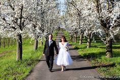 elope in wine country, napa valley weddings, napa valley springtime wedding,