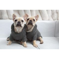 Twin French Bulldogs in Matching Isabella Cane Hoodie Knit Sweaters - Dog Pet Clothing