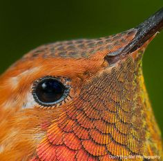Hermoso colibri