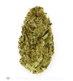Amnesia Haze (fem) quality Cannabis Seeds #addictedtoweed