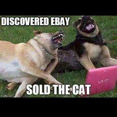 funny animal memes funny dogs Please visit our website, we have a lot of funny a… lustige Tiermemes lustige Hunde Bitte besuchen Sie unsere Website, wir haben viele lustige und interessante Fotos. Funny Animal Jokes, Funny Dog Memes, Cute Funny Animals, Memes Humor, Funny Cute, Funny Sayings, Dog Humor, Funny Puppies, Super Funny