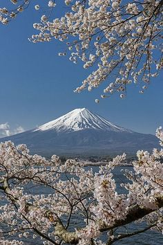 Full bloom under blue sky by Takashi on At Kawaguchiko-Lake. It was perfect full bloom of Sakura under the blue sky. The snow peak of Mt Fuji had been shining in the blue sky. Landscape Photography, Nature Photography, Travel Photography, Mount Fuji Japan, Fuji Mountain, Monte Fuji, Sky Photos, Nature Pictures, Japan Travel