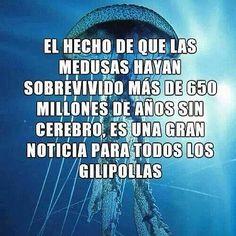 Las medusas no tienen cerebro