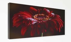 Bring something beautiful into your home  This 720mm wide x 320mm high x 40mm deep photographic print is ideal for bringing affordable photo art into your home.  This colour wall art picture is lightweight but robust, so it is easy to hang on your wall.