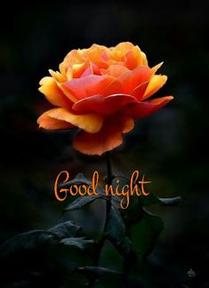 Good night images for Whatsapp group - Images Of DP Good Night Flowers, Good Night I Love You, Romantic Good Night, Good Night Prayer, Good Night Friends, Good Night Blessings, Good Night Wishes, Good Night Sweet Dreams, Good Night Image