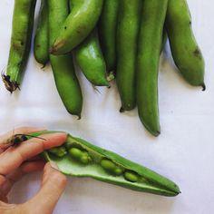 Beans Dicke Bohnen