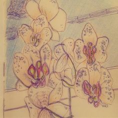 Адаптация. Adaptation #орхидея #quicksketch #sketch #sketchbook
