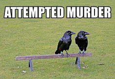 Attempted murder!