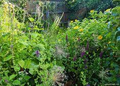 Water Features In The Garden, Beneficial Insects, Bees, Pond, Garden Design, Butterflies, Wildlife, Gardens, Plants