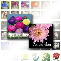 Digital collage download scrapbooking 1 inch scrabble tile paper supplies altered art jewelry making Birthday flowers