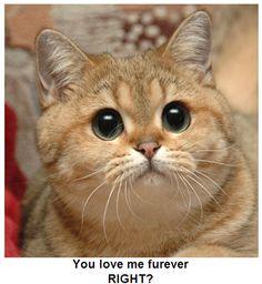 Cute Cat Needs Love