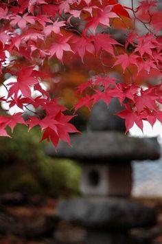 #Japan #garden