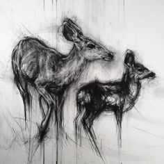 Work in progress mule deer of messing around left to do on this one . by aprilcoppini Animal Drawings, Art Drawings, Drawing Animals, Art Journal Inspiration, Art Inspo, Deer Drawing, Drawing Stuff, Drawing Ideas, Arte Grunge
