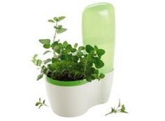 grow your own herbs....and it self waters!!!!  visit my website www.my2.tupperware.com/jolenegreen and add yourself to my contacts to receive my monthly specials.
