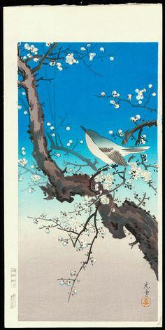 Koitsu, Tsuchiya (1870-1949) - Plum Warbler - 梅鶯