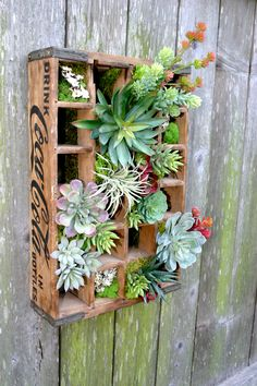 Faux Succulent Wall Hanging in Vintage Coka Cola Crate, Vertical Garden Succulent Wall, Succulent Arrangements, Faux Succulents, Suckers, Air Plants, Crates, Etsy Seller, Cool Stuff, Handmade Gifts