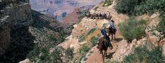 Mule Ride, Grand Canyon