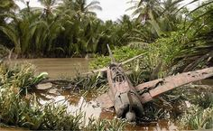 Wrecked plane in jungle 1/35 Scale Model Diorama