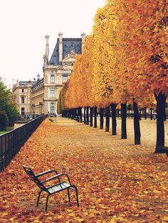 The falling of Autumn leaves in Paris