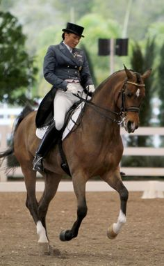 Look at this steel blue shadbelly with pink points! Go dressage fashion!