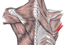 Knowing Shoulder Muscle Anatomy